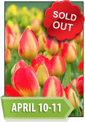 Spring in Seattle & Skagit Valley Tulip Festival Extended Journey